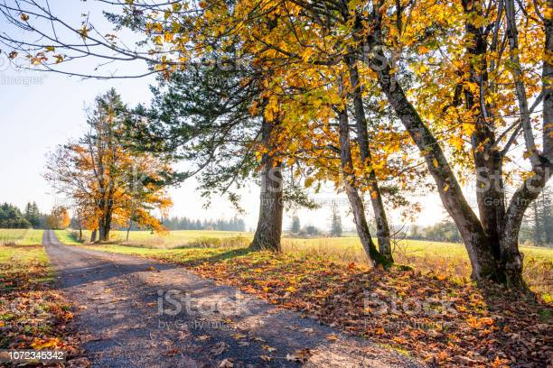 Photo of Road with yellowed autumn trees on the side of the road and fallen leaves burning in the sun