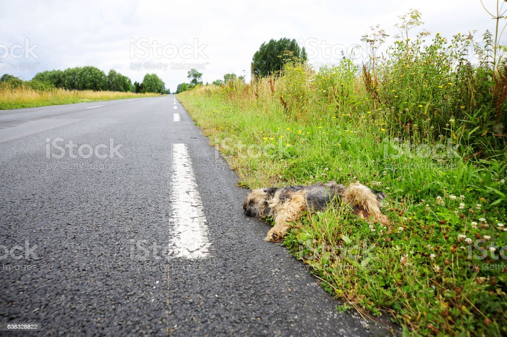 Roadkill: Mans' best friend? stock photo