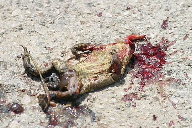 roadkill  - foto de acervo