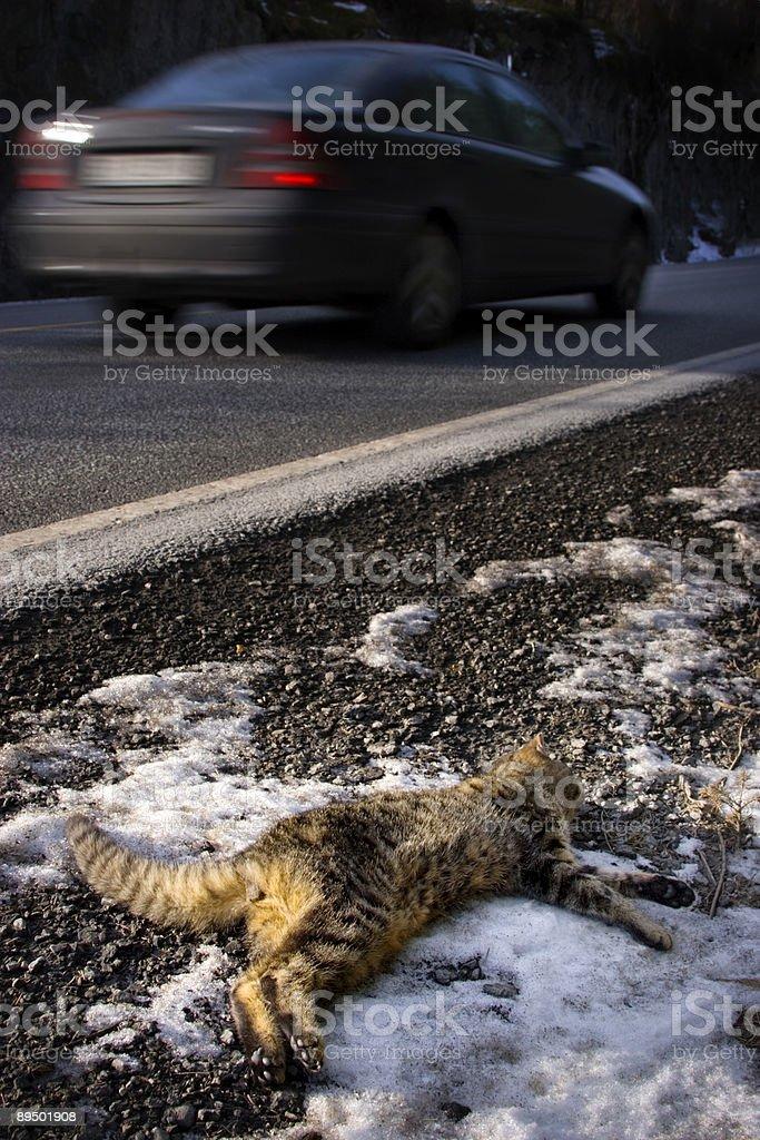Roadkill royalty-free stock photo