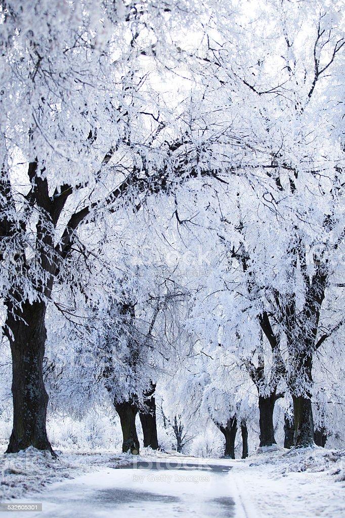 Carreteras en el paisaje de invierno - foto de stock