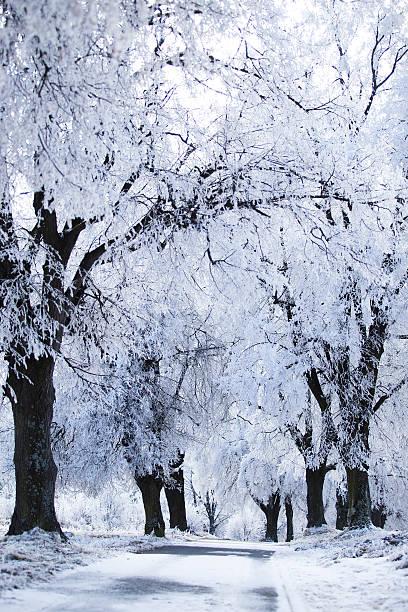 Estradas na paisagem de inverno - foto de acervo