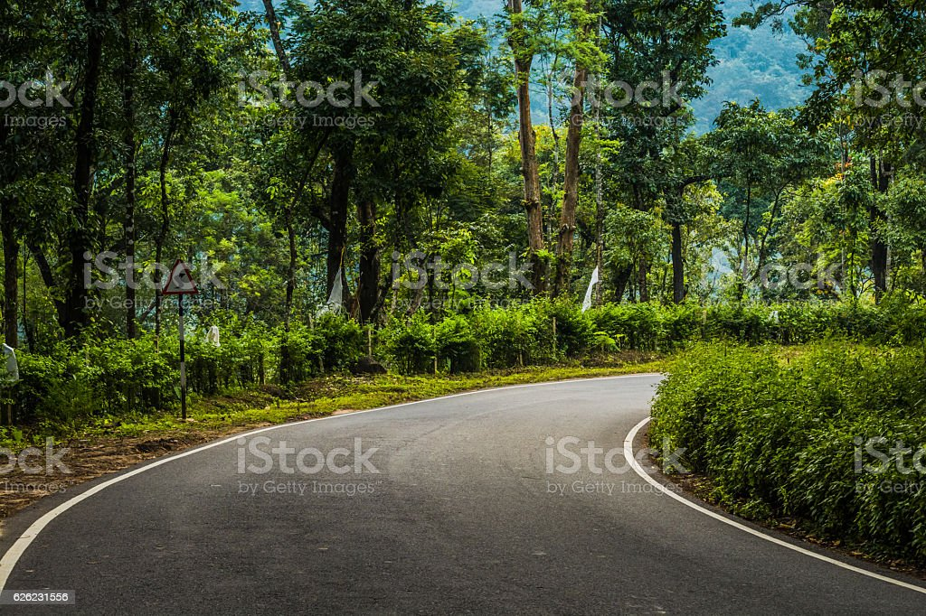 Roads In The Woods, Western Ghats, Karnataka, India stock photo