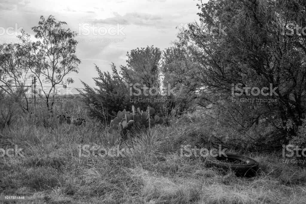 roadside shrubs with tire monochrome stock photo