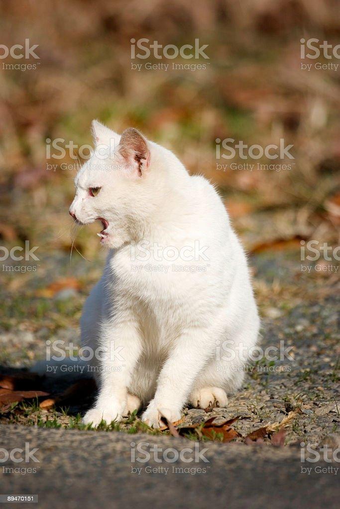 Roadside Stray Cat royalty-free stock photo