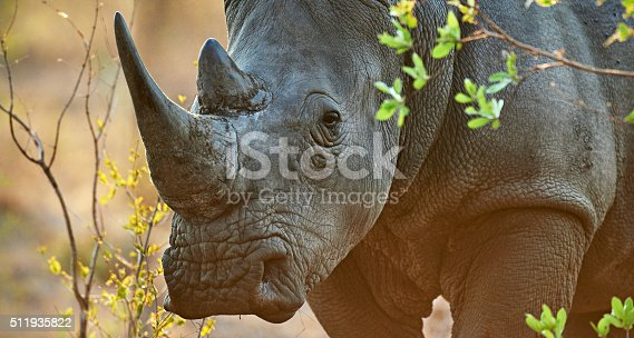 Shot of a rhinoceros in its natural habitathttp://195.154.178.81/DATA/i_collage/pi/shoots/806412.jpg