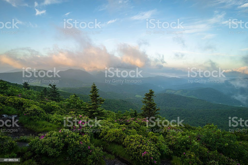 Roan Mountain Spring Rhododenron Blooms 3 stock photo