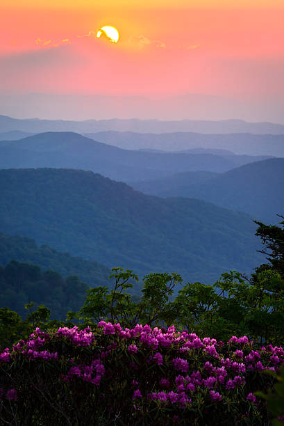 Roan Mountain Sunset The rhododendrons in full bloom on a warm spring evening during an amazing sunset at the Roan highlands in the Blue Ridge Mountains appalachian trail stock pictures, royalty-free photos & images