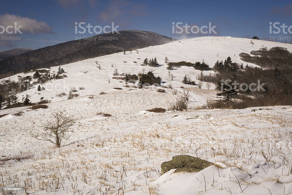 Roan Winter 3 stock photo