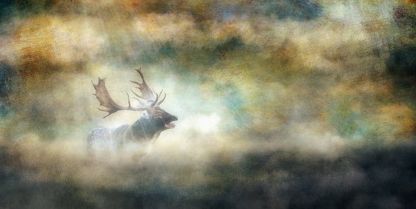 istock Roaring fallow deer buck in misty landscape. Old master painting style. 1070858906