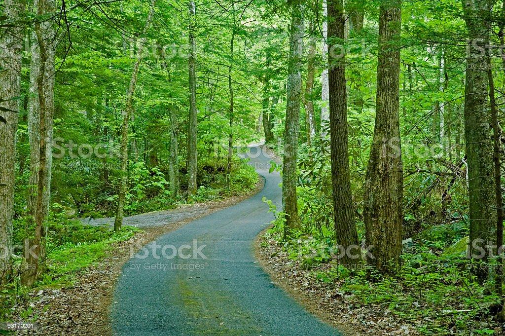 Roaring Fork Motor Nature Trail royalty-free stock photo