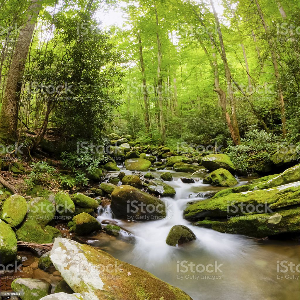 Roaring Fork River royalty-free stock photo