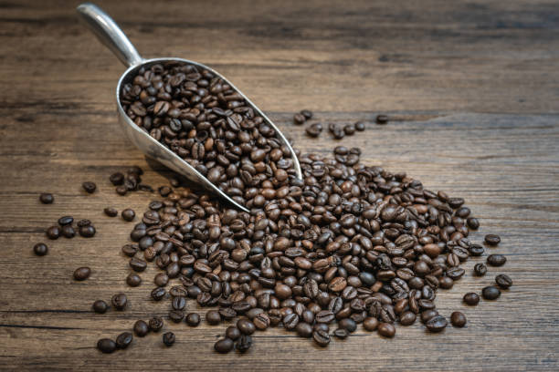 Roasted coffee beans in scoop stock photo