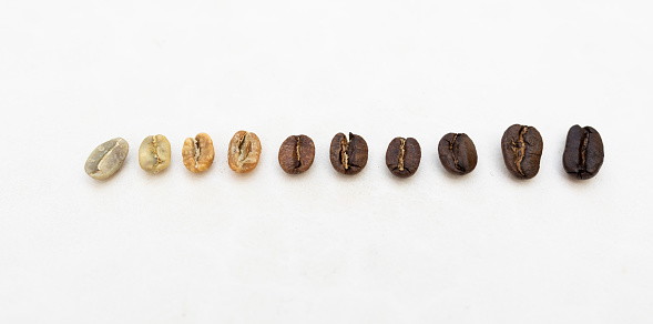 Roasted coffee beans roasting stages