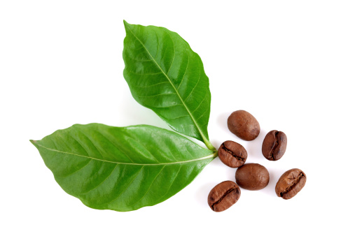 Roasted coffee beans with leaves on white background