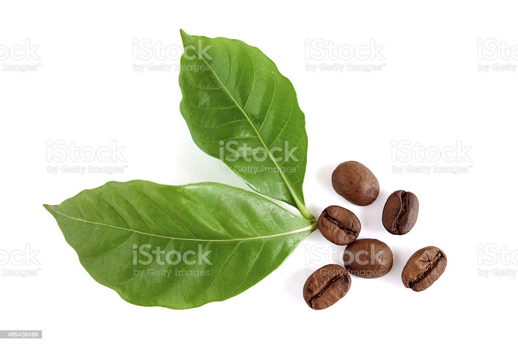 Roasted coffee beans with leaves stock photo