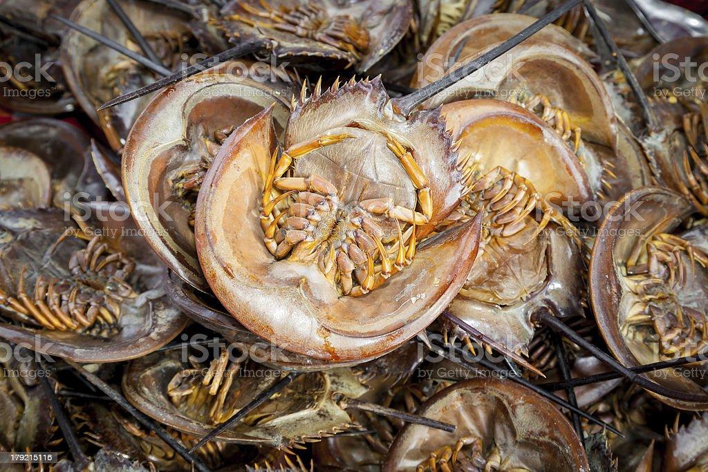 Roasted Mangrove horseshoe crab royalty-free stock photo