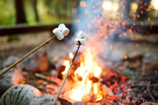 Roasting marshmallows on stick at bonfire. Having fun at camp fire. stock photo
