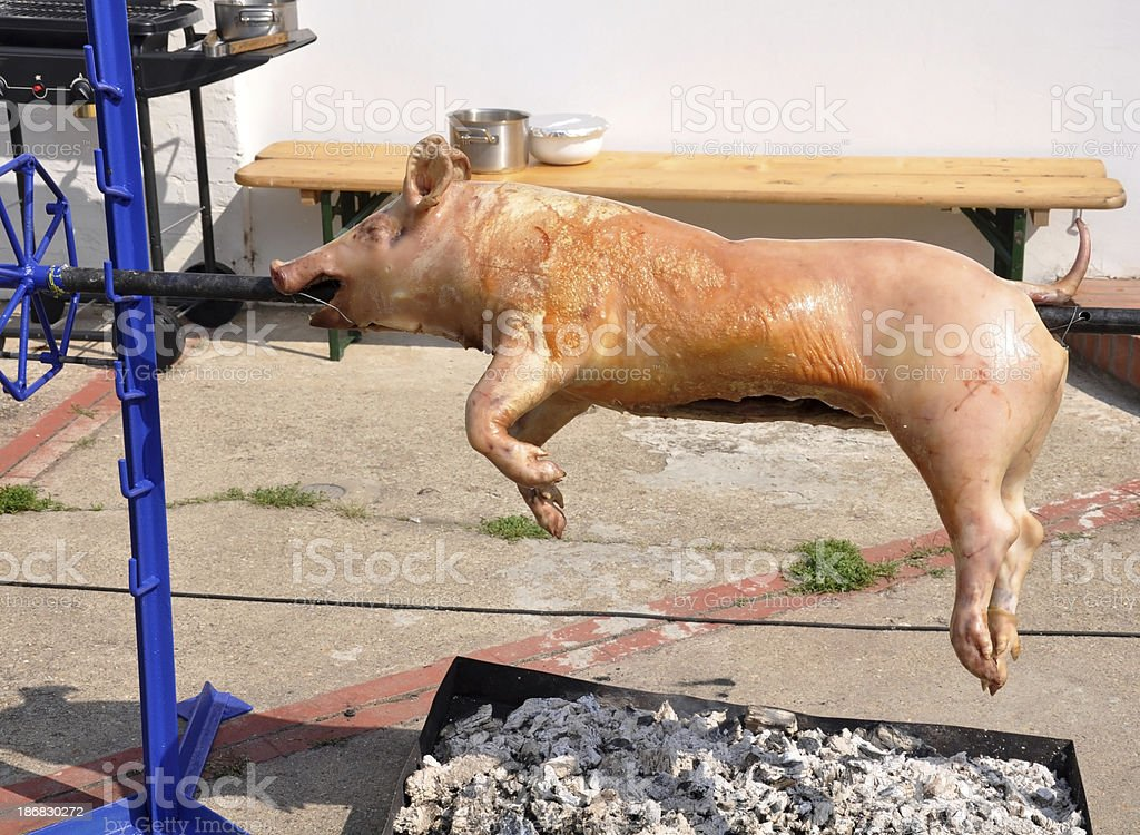 roasting piglet outdoors stock photo