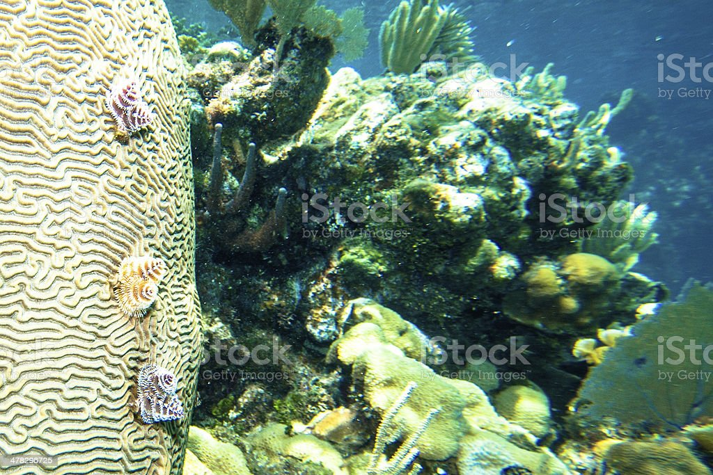 Roatan stock photo