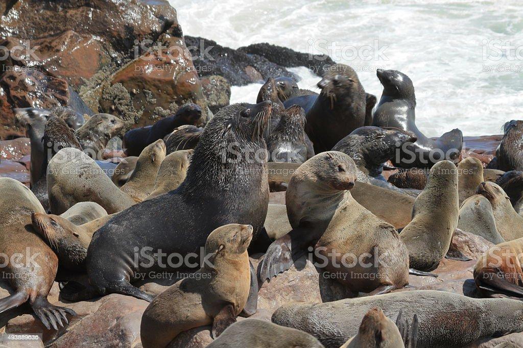 Robbenkolonie bei Cape Cross in Namibia stock photo