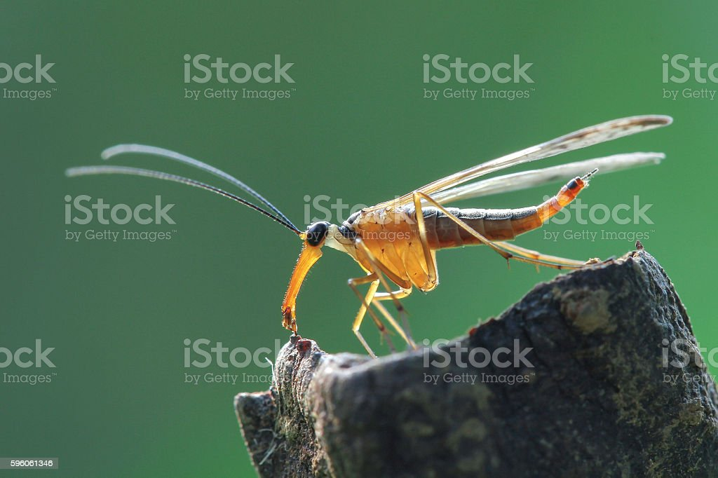 Robber - Take off Position royalty-free stock photo