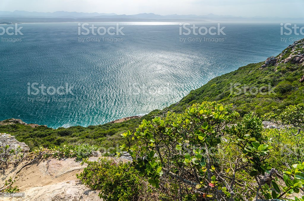 Robberg Nature Reserve vegetation indian ocean, Garden route. South Africa stock photo