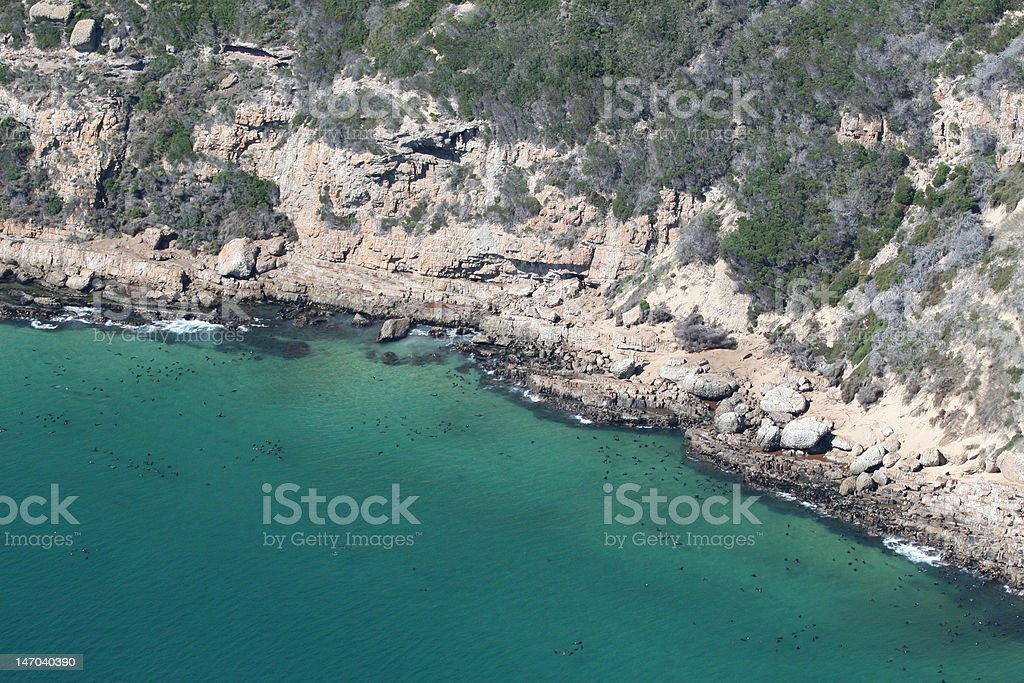 Robberg seal colony stock photo