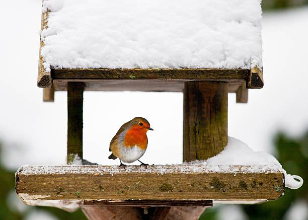Robin at a snowy bird feeder in winter picture id96830500?b=1&k=6&m=96830500&s=612x612&w=0&h=bqxk 1ia04j5rjucakbccufiendyz5a6h8v3pqyvxzq=