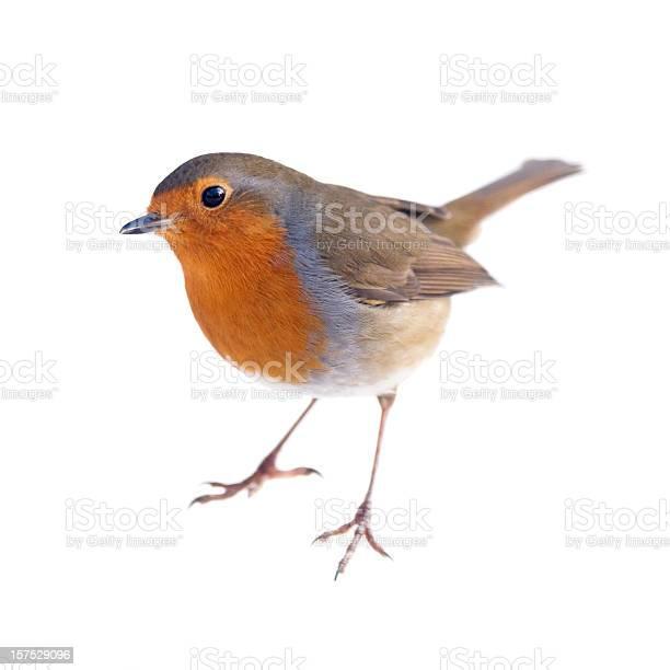 Robin picture id157529096?b=1&k=6&m=157529096&s=612x612&h=5z 55gc2nptylahjj0nj1p11uht2o7nzhuxpmckppbc=