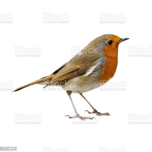 Robin picture id471196487?b=1&k=6&m=471196487&s=612x612&h=oqlhntpcq3kfat2lqf5yltfwayijstry7vhxy4znlnq=