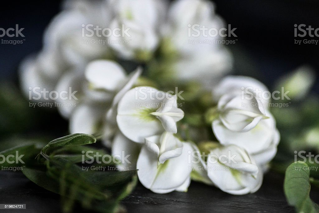 Robinia pseudoacacia , flowers stock photo