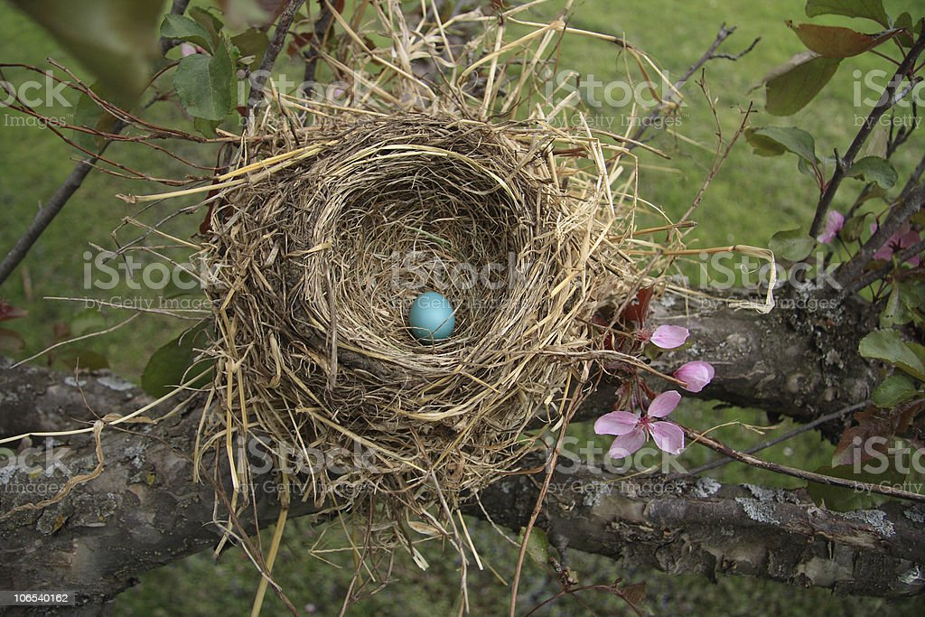 Robin's nest royalty-free stock photo