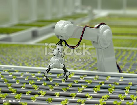 3D Robotic arm harvesting hydroponic lettuce in a greenhouse - technology concepts