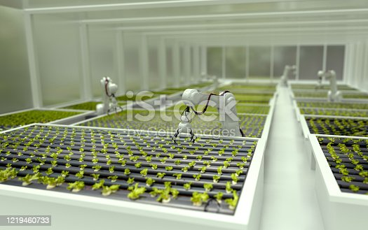3D robots growing lettuce in a greenhouse - automated processes concepts