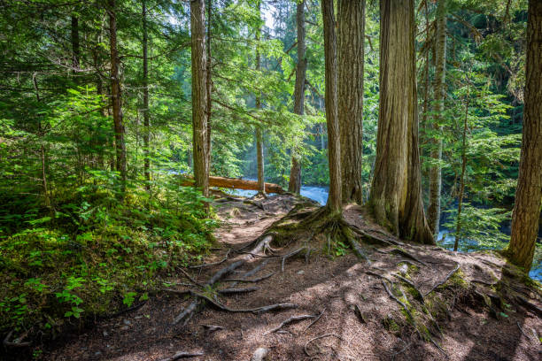 Robson River at the Kinney Lake Trail in Mount Robson Provincial Park, Canada stock photo
