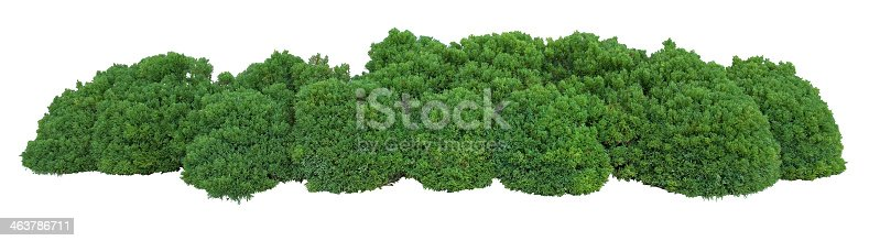 Bush trimmed into round shape