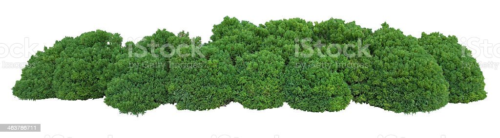 Robust bushes - best curb appeal you can do  stock photo