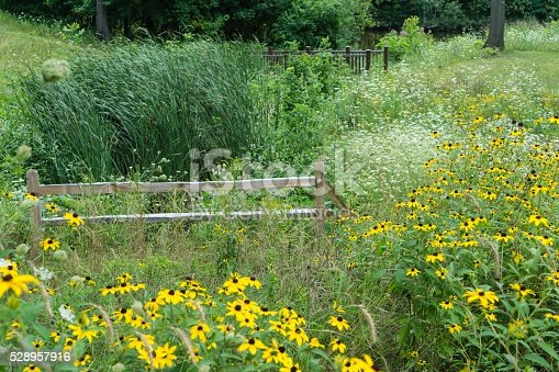A meadow and nature preserve in the Rochester, Michigan Samuel Howlett City Park