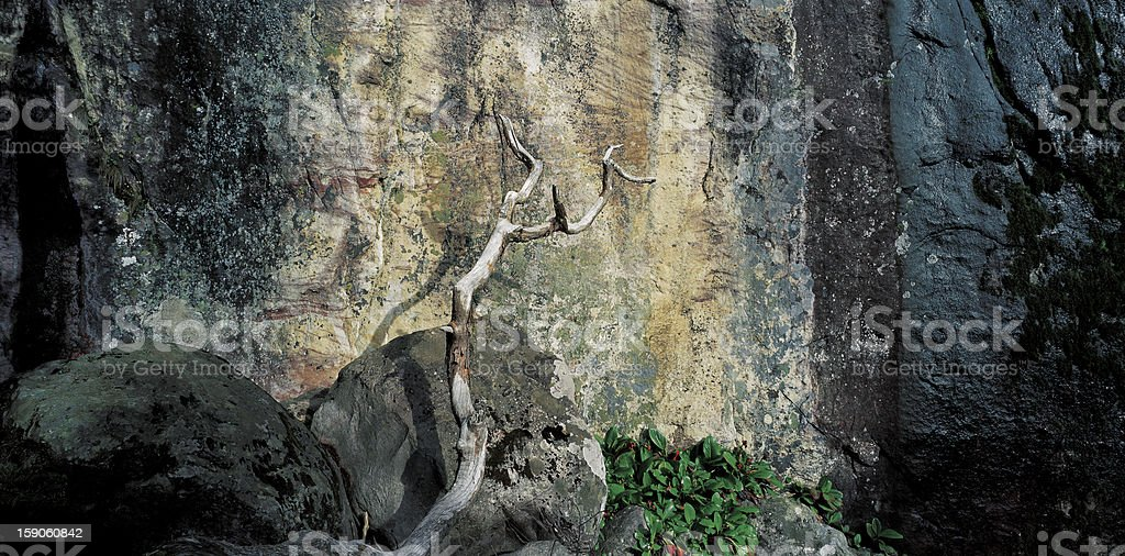 Rock and Dead Tree royalty-free stock photo