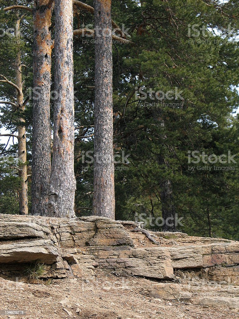 Rock and pine stock photo