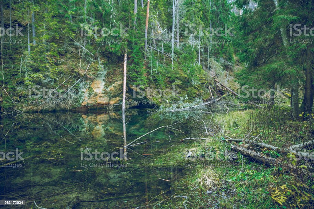Rock at the river Gauja in Latvia 免版稅 stock photo