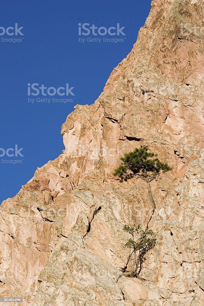rock bonsai tree 4 royalty-free stock photo