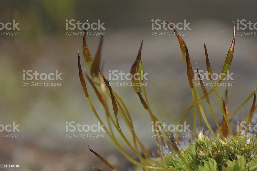 rock covered by moss royalty-free stock photo