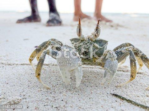 Rock Crab on Sandy Beach.