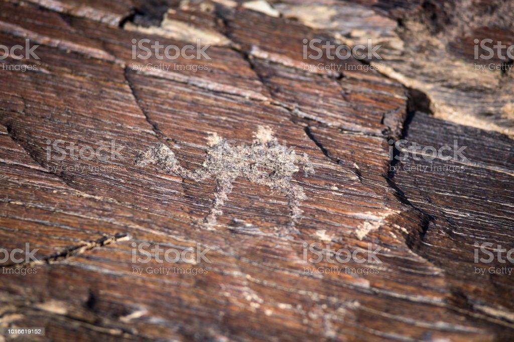 rock engravings stock photo