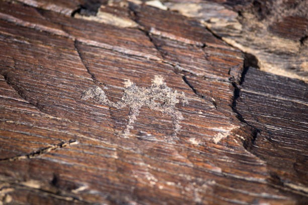 rock engravings stock photo