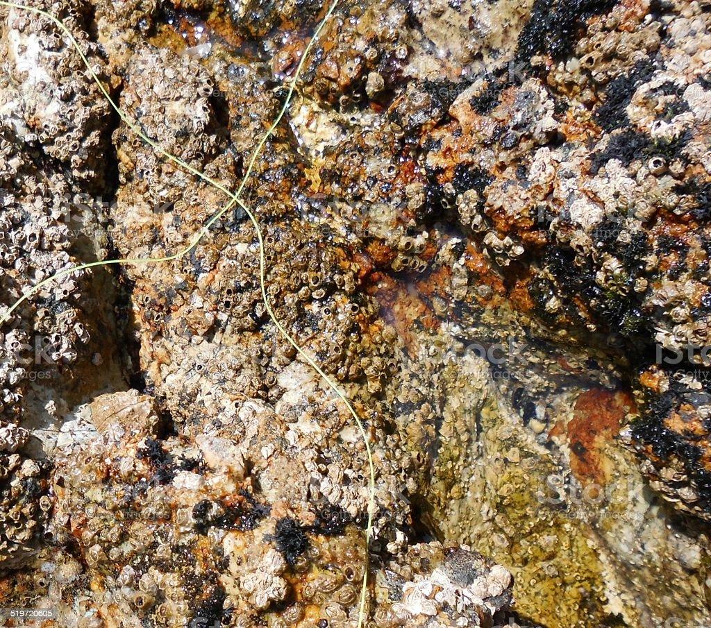 Rock exposed by the low tide with two crossed strings stok fotoğrafı