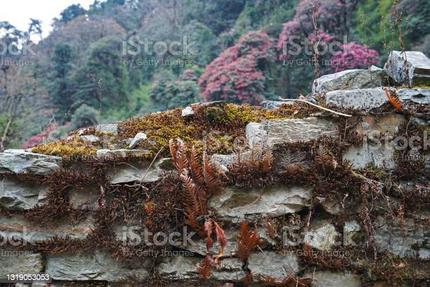 Photo of Rock fence covered with moss and fern plants