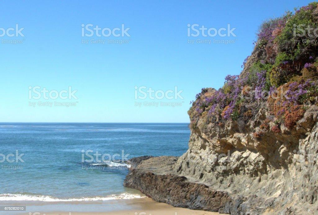 Rock flowers in Laguna Beach. stock photo